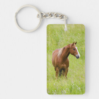 USA, Washington, Horse in Spring Field, Key Ring