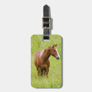 USA, Washington, Horse in Spring Field, Luggage Tag