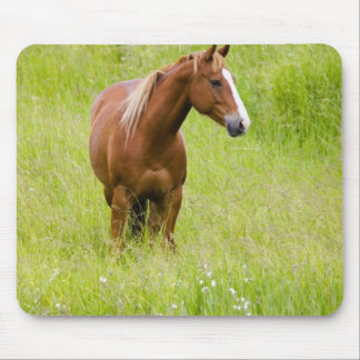 USA, Washington, Horse in Spring Field, Mouse Mat
