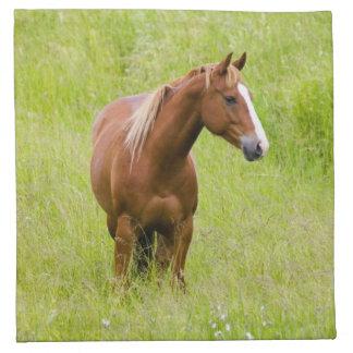 USA, Washington, Horse in Spring Field, Napkin
