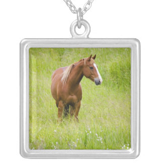 USA, Washington, Horse in Spring Field, Silver Plated Necklace