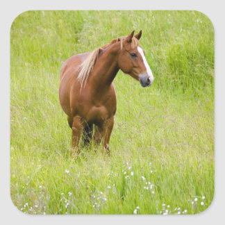 USA, Washington, Horse in Spring Field, Square Sticker