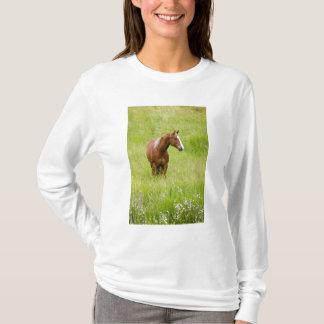 USA, Washington, Horse in Spring Field, T-Shirt