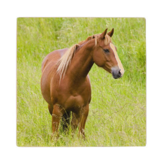USA, Washington, Horse in Spring Field, Wood Coaster