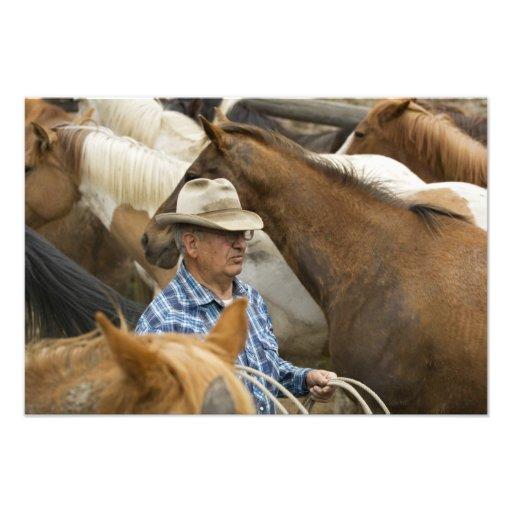USA, Washington, Malaga, Cowboy foreman on Photograph
