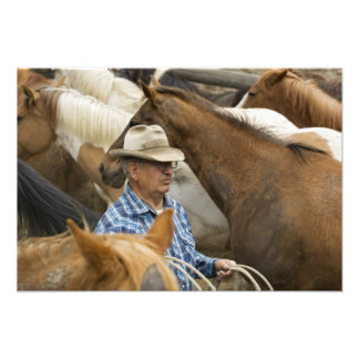 USA, Washington, Malaga, Cowboy foreman on Photo Print