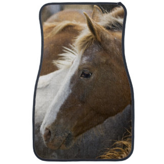 USA, Washington, Malaga, Horse head profile in Car Mat