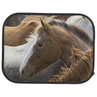 USA, Washington, Malaga, Horse head profile in Car Mat