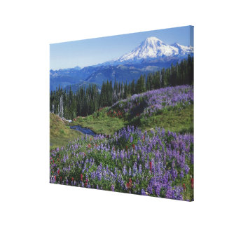 USA Washington Mt Adams Wilderness Meadows Stretched Canvas Print