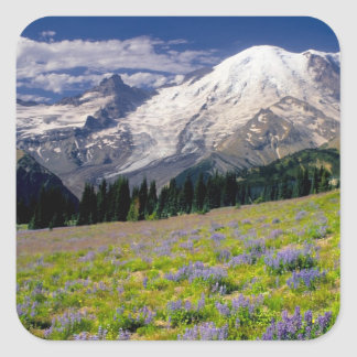 USA, Washington, Mt. Rainier National Park. Square Sticker