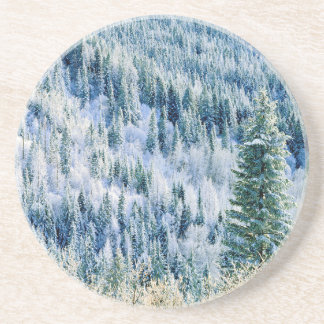 USA, Washington, Mt. Spokane State Park, Aspen 2 Coaster