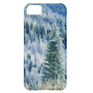 USA, Washington, Mt. Spokane State Park, Aspen 2 iPhone 5C Case