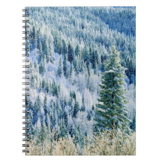 USA, Washington, Mt. Spokane State Park, Aspen 2 Notebooks