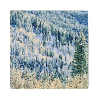 USA, Washington, Mt. Spokane State Park, Aspen 2 Wood Coaster