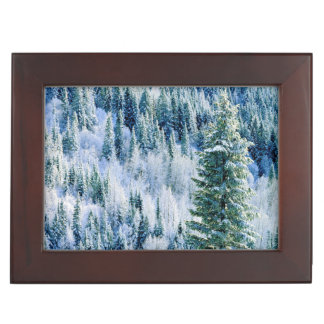 USA, Washington, Mt. Spokane State Park, Aspen Keepsake Box