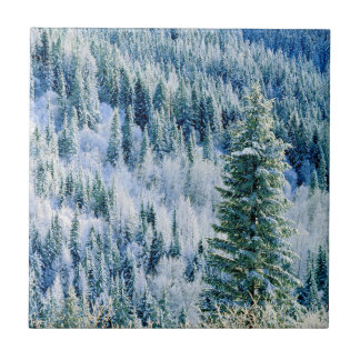 USA, Washington, Mt. Spokane State Park, Aspen Tile