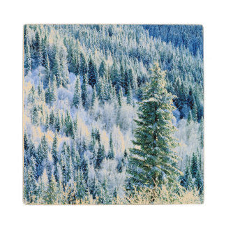 USA, Washington, Mt. Spokane State Park, Aspen Wood Coaster