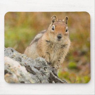 USA, Washington, North Cascades National Park 11 Mouse Mat