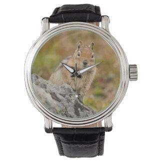 USA, Washington, North Cascades National Park 11 Watch