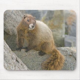 USA, Washington, North Cascades National Park 2 Mouse Pad