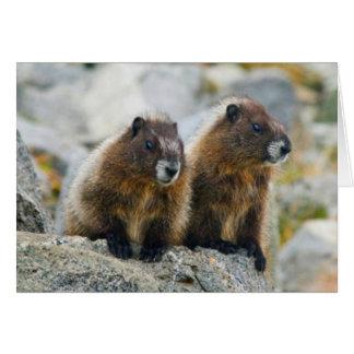 USA, Washington, North Cascades National Park 3 Card