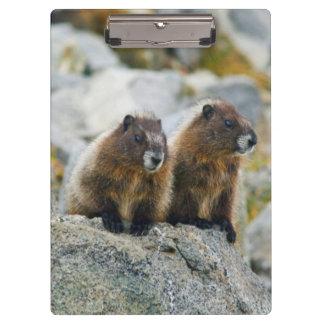 USA, Washington, North Cascades National Park 3 Clipboard