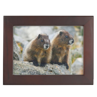 USA, Washington, North Cascades National Park 3 Keepsake Box