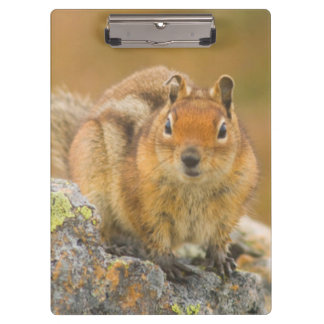 USA, Washington, North Cascades National Park 5 Clipboard