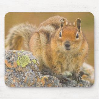 USA, Washington, North Cascades National Park 5 Mouse Mat