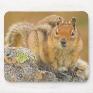 USA, Washington, North Cascades National Park 5 Mouse Pad
