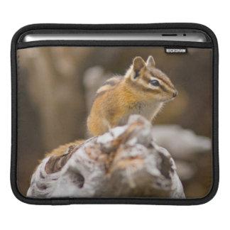 USA, Washington, North Cascades National Park 9 iPad Sleeve
