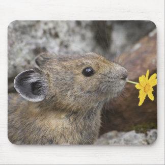 USA, Washington, North Cascades National Park, Mouse Mat