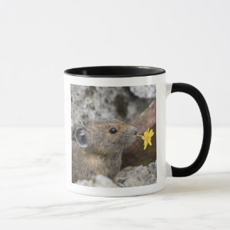 USA, Washington, North Cascades National Park, Mug