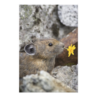 USA, Washington, North Cascades National Park, Photo Art