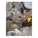 USA, Washington, North Cascades National Park, Postcard