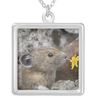 USA, Washington, North Cascades National Park, Silver Plated Necklace