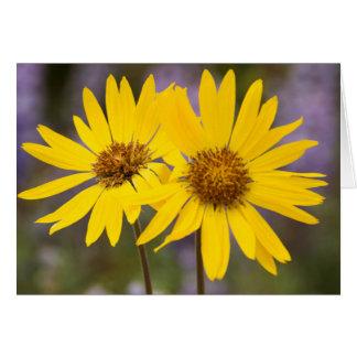 USA, Washington, Okanogan National Forest Card
