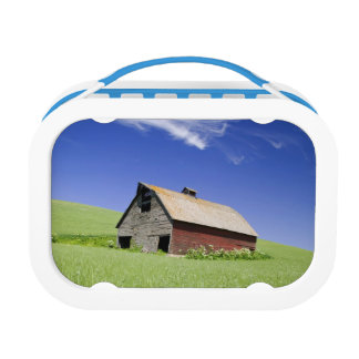 USA, Washington, Old Red Barn in the Spring Lunch Box