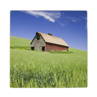 USA, Washington, Old Red Barn in the Spring Wood Coaster
