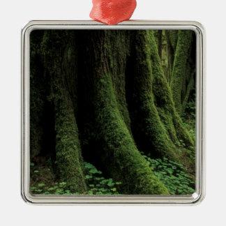 USA, Washington, Olympic National Park, 2 Christmas Ornament