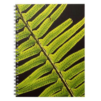 USA, Washington, Olympic National Park, Backlit Notebook
