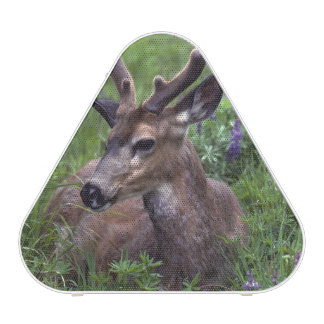 USA, Washington, Olympic National Park. Deer