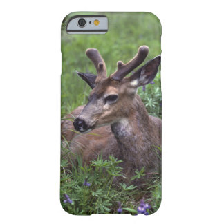 USA, Washington, Olympic National Park. Deer Barely There iPhone 6 Case