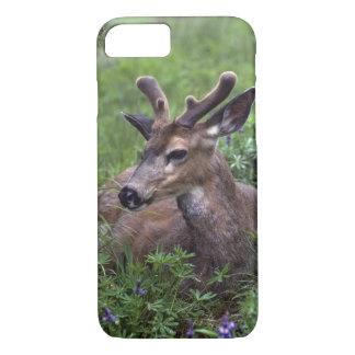 USA, Washington, Olympic National Park. Deer iPhone 8/7 Case