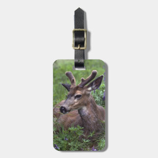 USA, Washington, Olympic National Park. Deer Luggage Tag