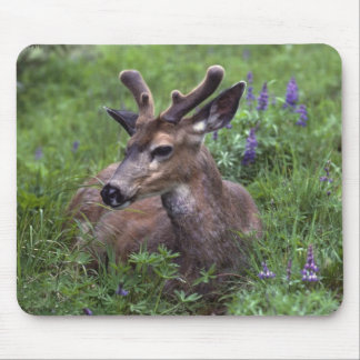 USA, Washington, Olympic National Park. Deer Mouse Pad