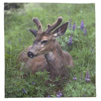 USA, Washington, Olympic National Park. Deer Napkin