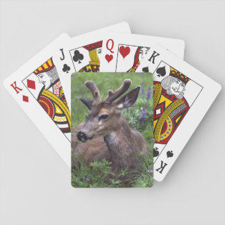 USA, Washington, Olympic National Park. Deer Playing Cards