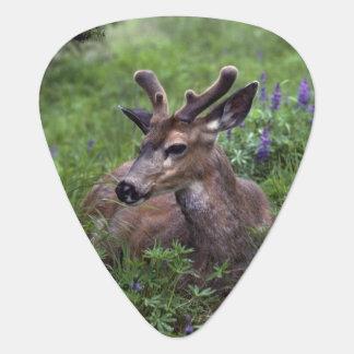 USA, Washington, Olympic National Park. Deer Plectrum