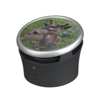 USA, Washington, Olympic National Park. Deer Speaker